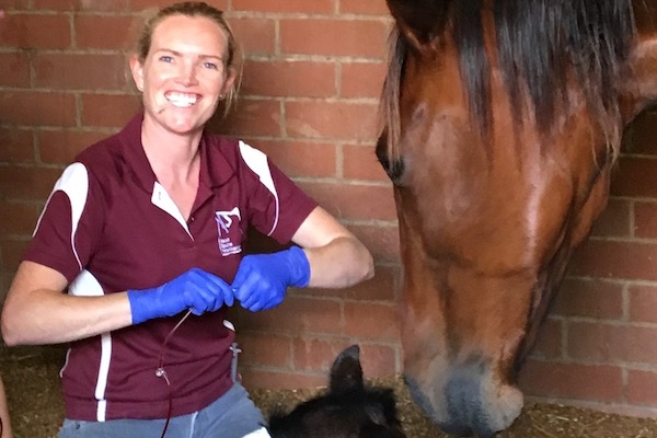 Dr Annemarie Cullimore, Ascot Equine Veterinarians, Ascot Equine vet, Performance horse, Racehorse